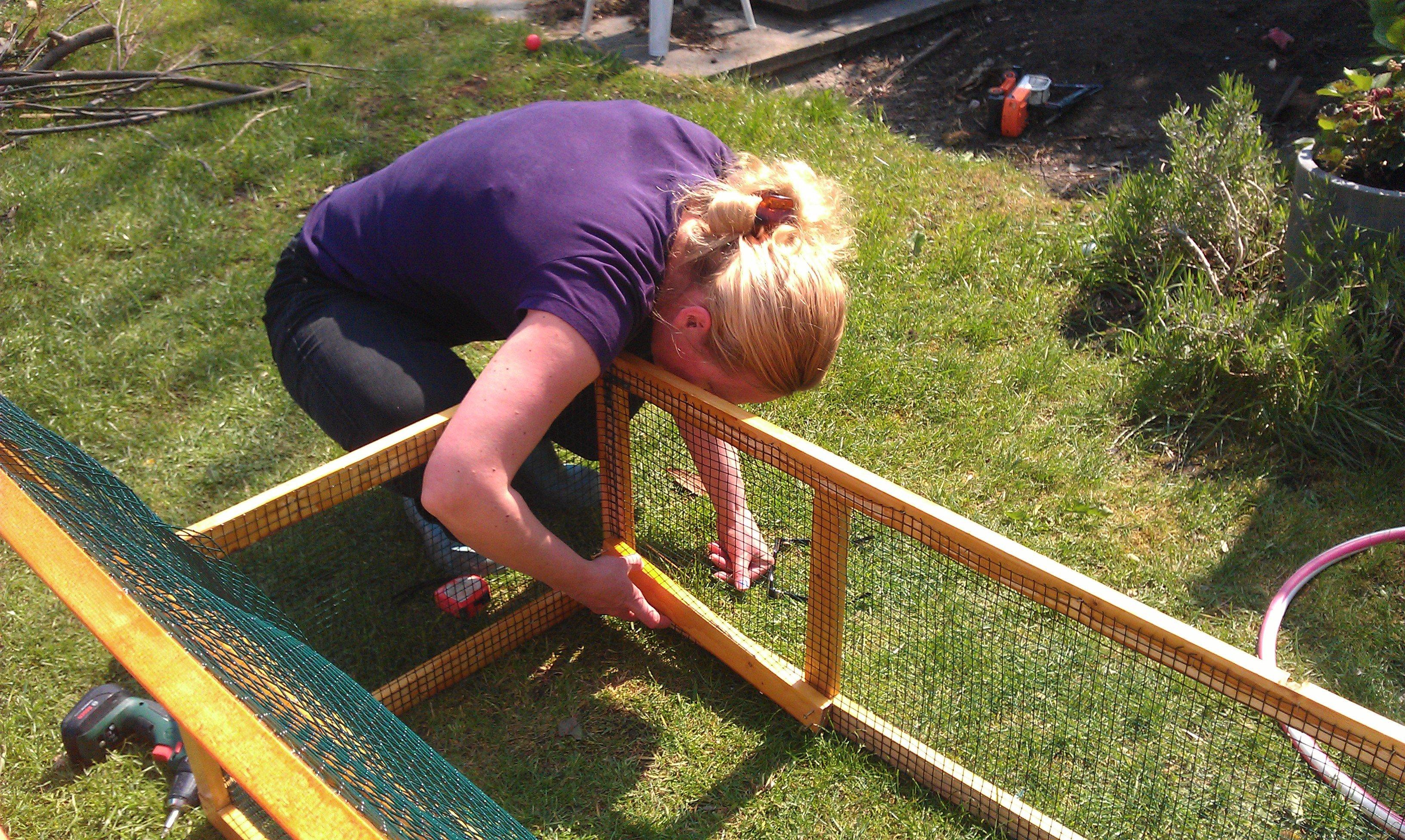 Caviahok bouwen